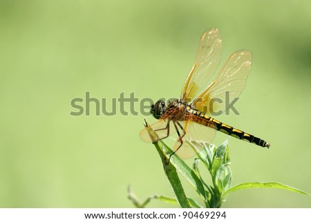 closeup of beautiful dragonflies on a green plant