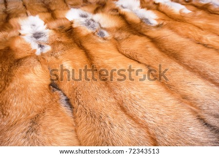 Closeup of beautiful fox - stock photo