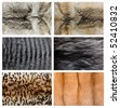 Closeup of beautiful fox wolf mink fur. - stock photo