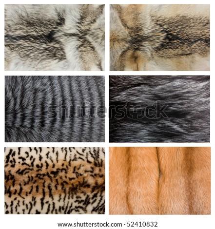 Closeup of beautiful fox wolf mink fur. - stock photo
