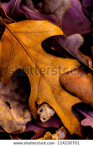 Closeup of Beautiful Intricate Fall Foliage. - stock photo