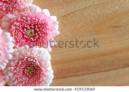 Closeup of beautiful pink Gerber flowers on a wooden surface - stock photo