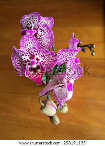 Closeup of beautiful pink orchid flower on a wooden background - stock photo