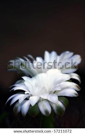 Closeup of beautiful white flower. - stock photo