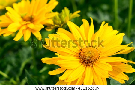 Closeup of beautiful yellow flowers