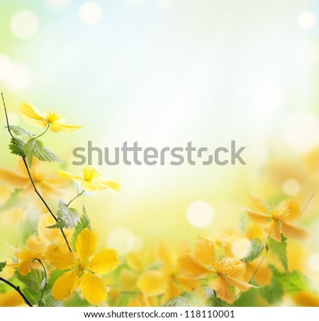 Closeup of beautiful yellow flowers in the garden - stock photo