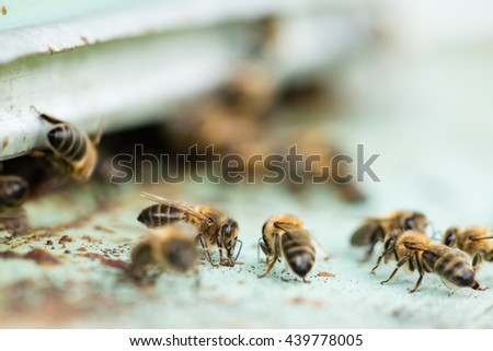 closeup of Bee carries pollen and nectar to the hive, Shallow dof and selective focus, macro - stock photo