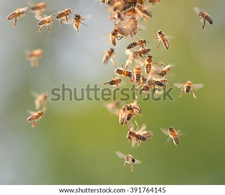 Closeup of bees flying in apiary - stock photo