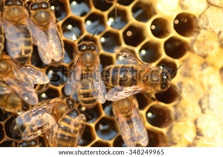 closeup of bees on honeycomb in apiary in the autumn