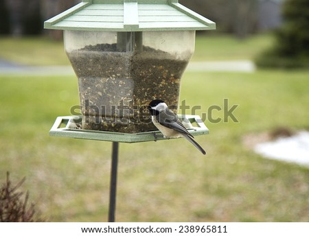 Closeup of black capped chickadee while  perched  on bird feeder during winter season while looking a bit puzzled.  - stock photo