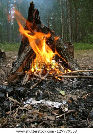 Closeup of bonfire in the wood - stock photo