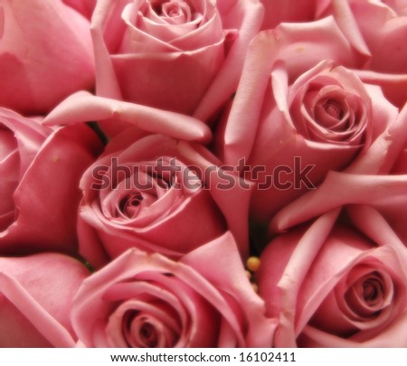closeup of bouquet of soft pink roses - stock photo
