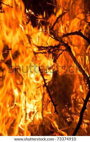 Closeup of burning bushes - stock photo