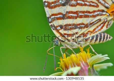 Closeup of butterfly on flower