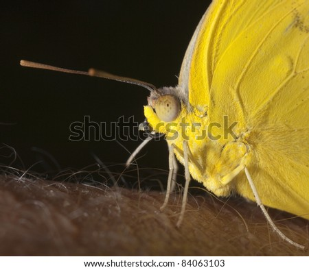Closeup of butterfly on human arm - stock photo