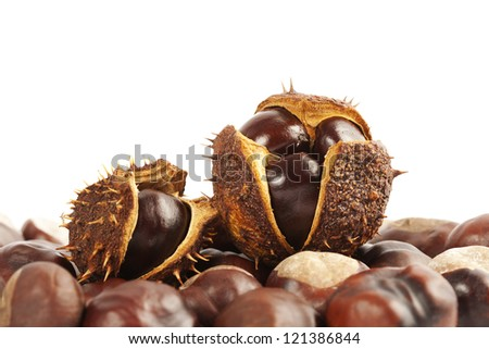 closeup of chestnuts in shell o white background