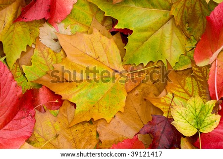 Closeup of colored leaves. Very vibrant colors. Ideal as a texture or background.