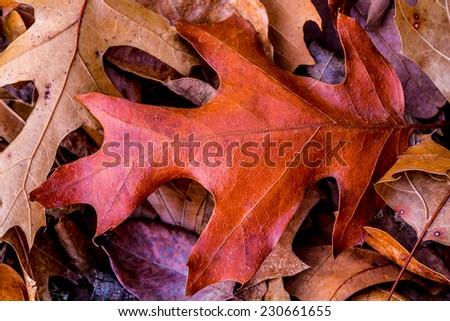 Closeup of Colorful Intricate Fall Foliage. - stock photo