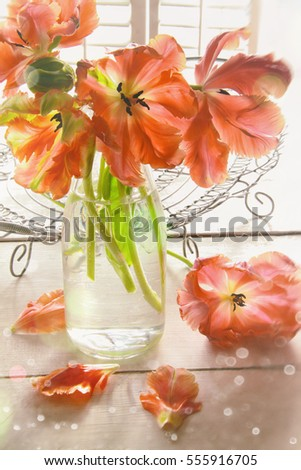 Closeup of colorful orange tulips near window