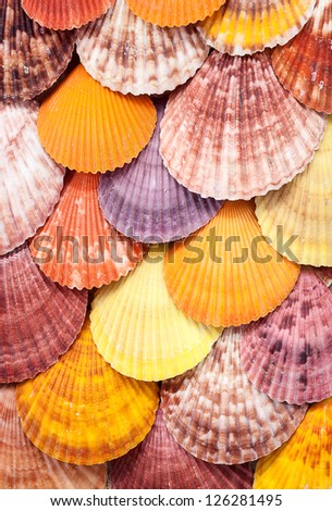 Closeup of colorful scallops filled the whole frame. - stock photo