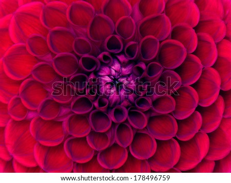 closeup of colourful flower  - stock photo