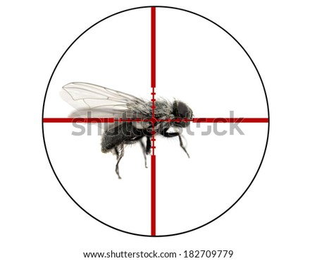 Closeup of common housefly with wings and legs isolated on white in crosshairs symbolizing pest control - stock photo