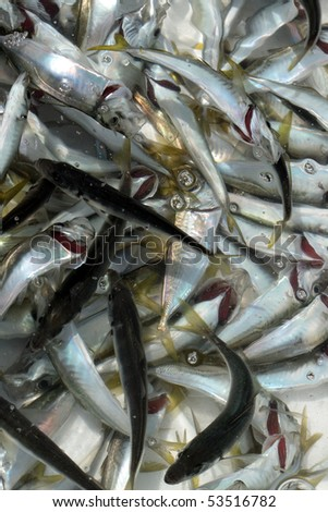 Closeup of container with small silver fish in water