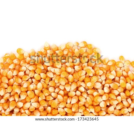 Closeup of corn grains. Isolated on a white background - stock photo