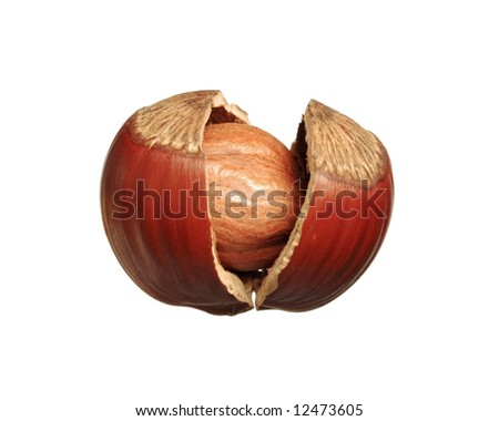 Closeup of cracked hazelnut - isolated on white background - stock photo