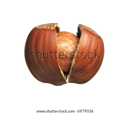 Closeup of cracked hazelnut - isolated on white background. - stock photo