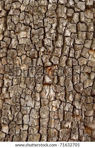 closeup of cracked tree trunk - stock photo