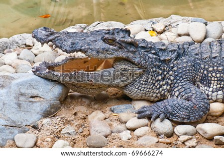 Closeup of crocodile head, Thailand. - stock photo