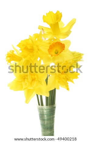 Closeup of Daffodil flower arrangement against white