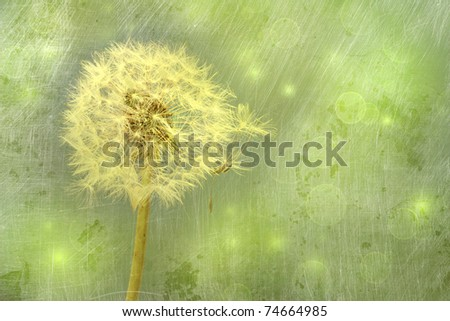 Closeup of dandelion against a green background - stock photo
