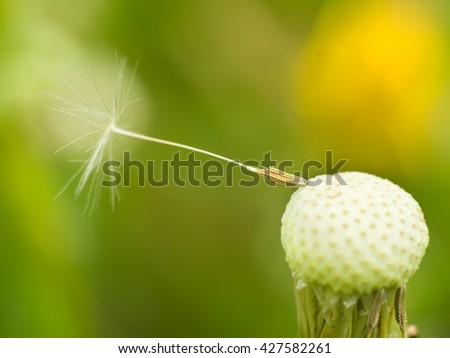 Closeup of dandelion on natural background - stock photo