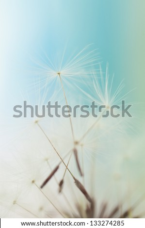 Closeup of dandelion seed - stock photo