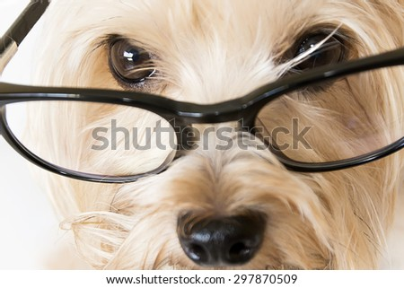Closeup of dog with glasses - stock photo