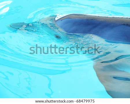 Closeup of dolphin swimming in clear water. - stock photo