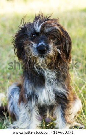 Closeup of domestic dog  posing sitting down outdoor.