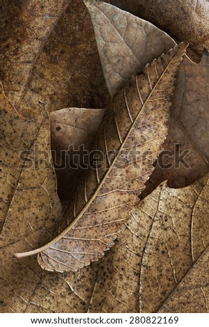 Closeup of dried leaves showing off their earthy colours. - stock photo