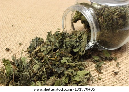 Closeup of dried nettle, dried nettle pouring out of glass jar on jute canvas - stock photo