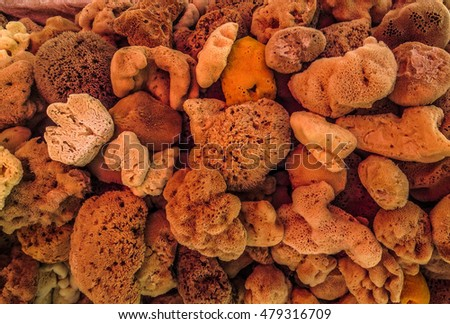 Closeup of dried sea sponges of various textures from Greece.