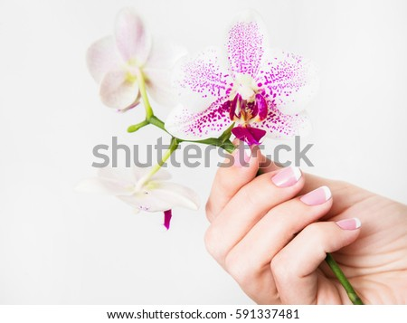 Closeup female hand holding orchid flowers stock photo edit now closeup of female hand holding orchid flowers isolated on white background fingernails with beautiful french mightylinksfo