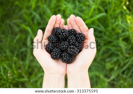Closeup of female hands holding handful of blackberries on green grass background. Top view - stock photo