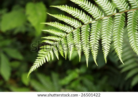 Closeup of fern
