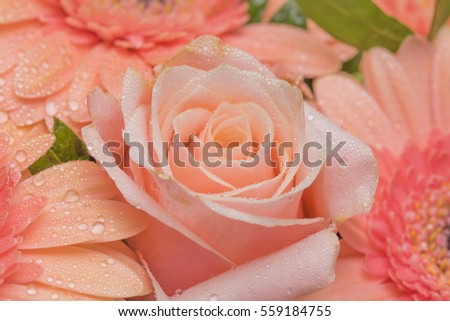 Closeup of flowers - happiness