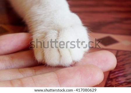 closeup of foot cat in hand of the owner
