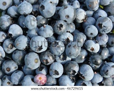 Closeup of fresh blueberries - texture