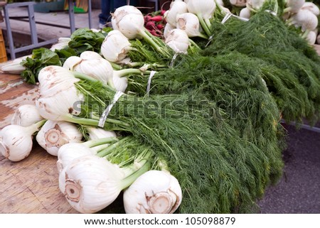 closeup of fresh fennel at green market