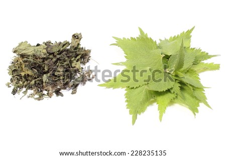 Closeup of fresh green nettle and heap of dried nettle. Isolated on white background - stock photo